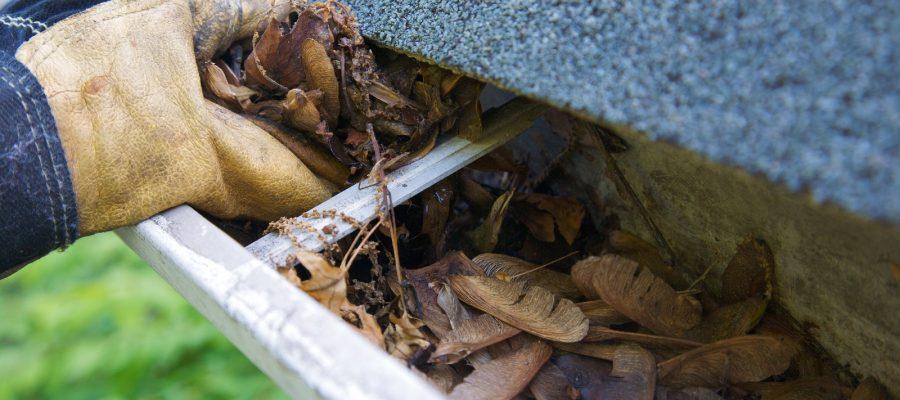 bigstock-Fall-Cleanup-Leaves-In-Gutte-3121364-900x400.jpg