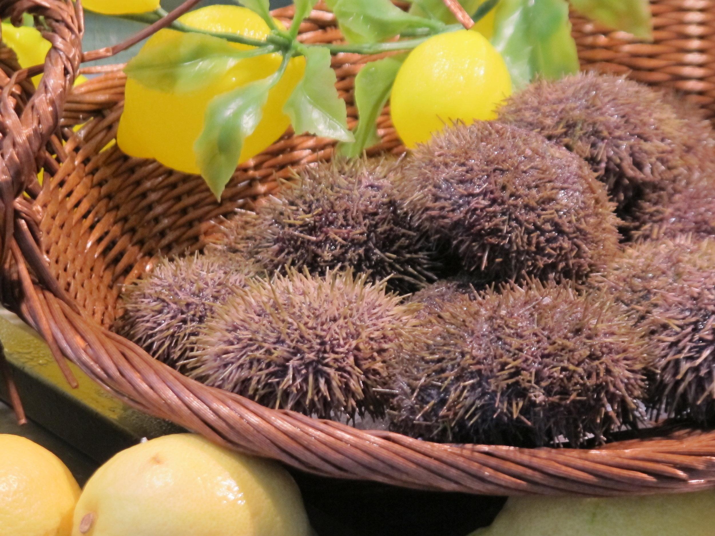 Sea urchins at  Le Dôme,  a seafood restaurant in Paris.Photo: Elizabeth Kemble.