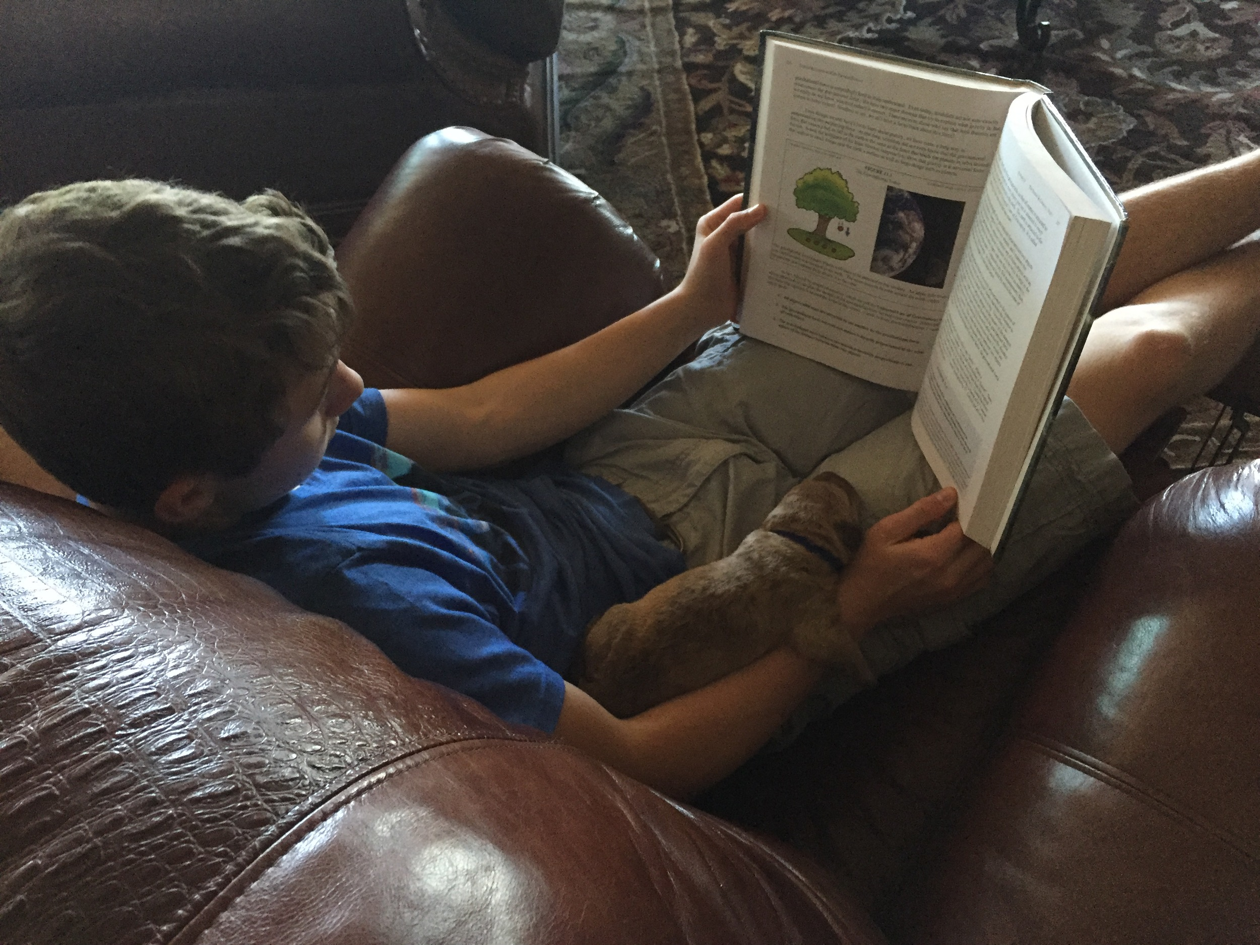 Chesapeake Bay Retriever Reading Science