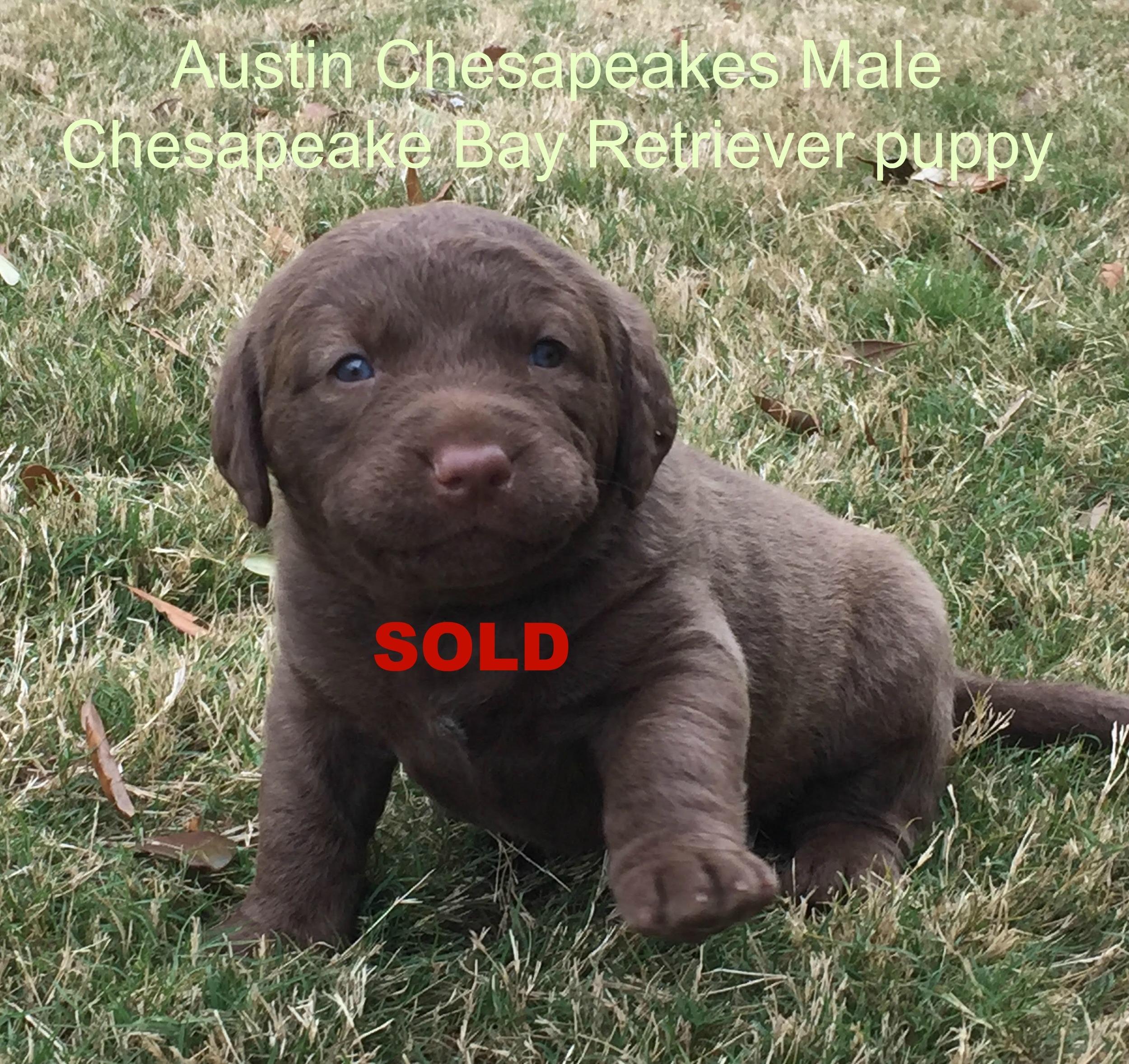 Black sold