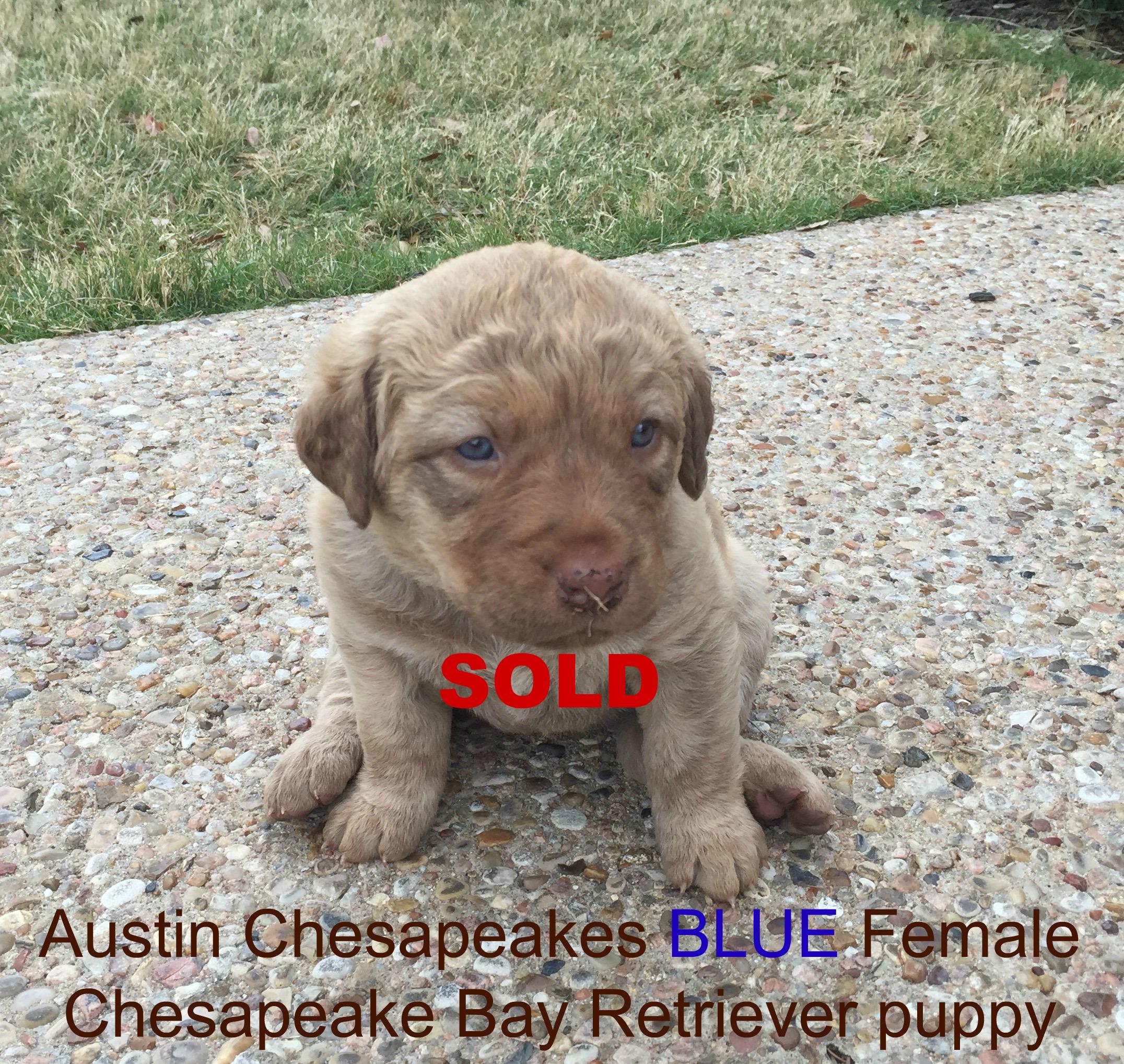 Blue sold