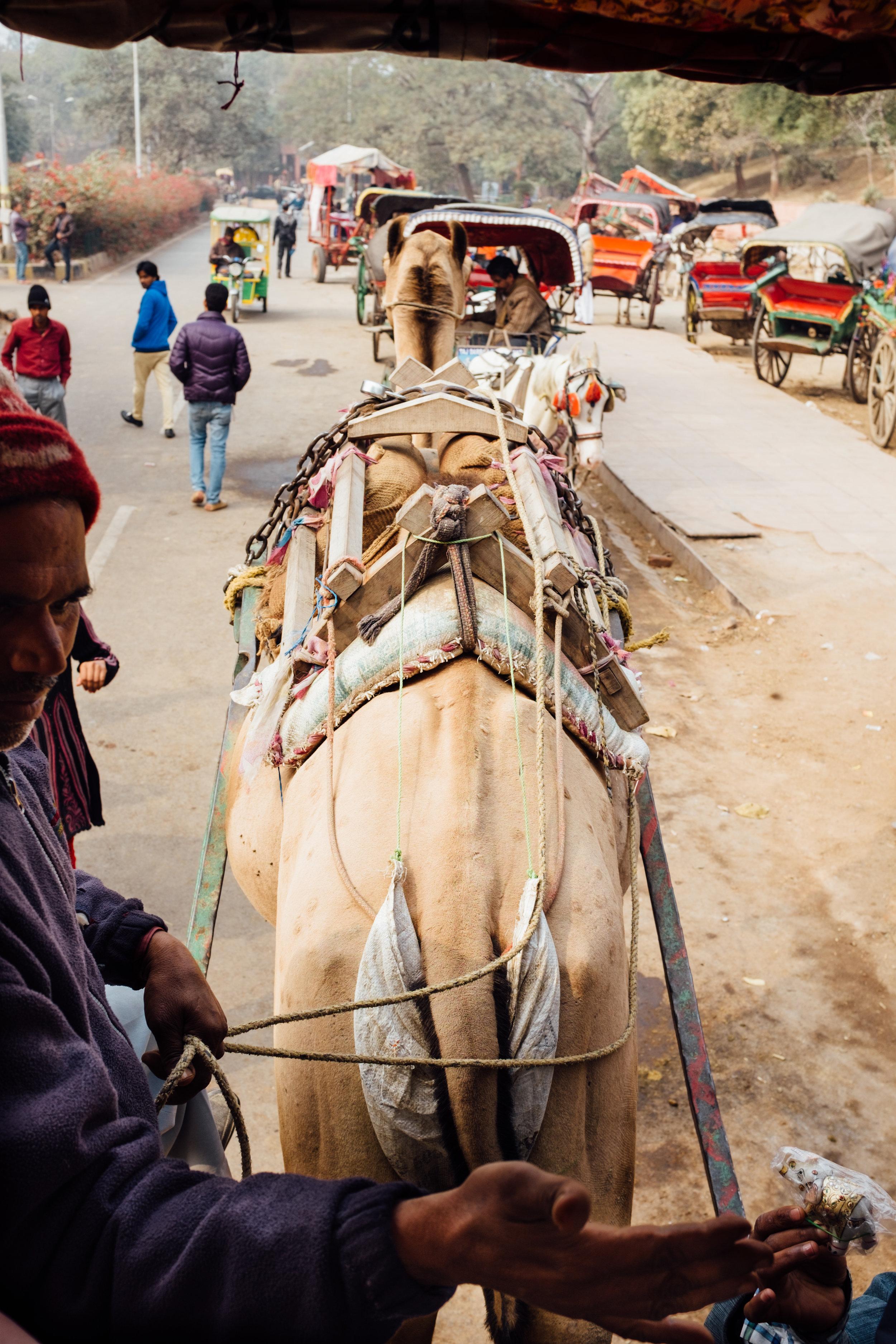 Our camel ride leaving the Taj