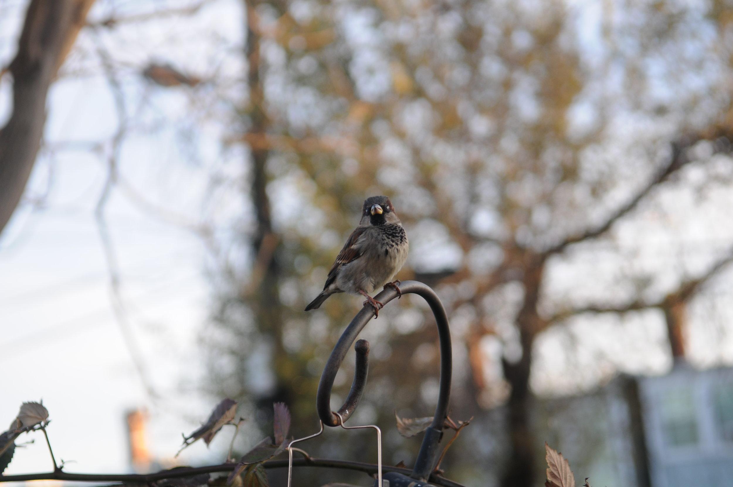 Bird Watch copy.JPG