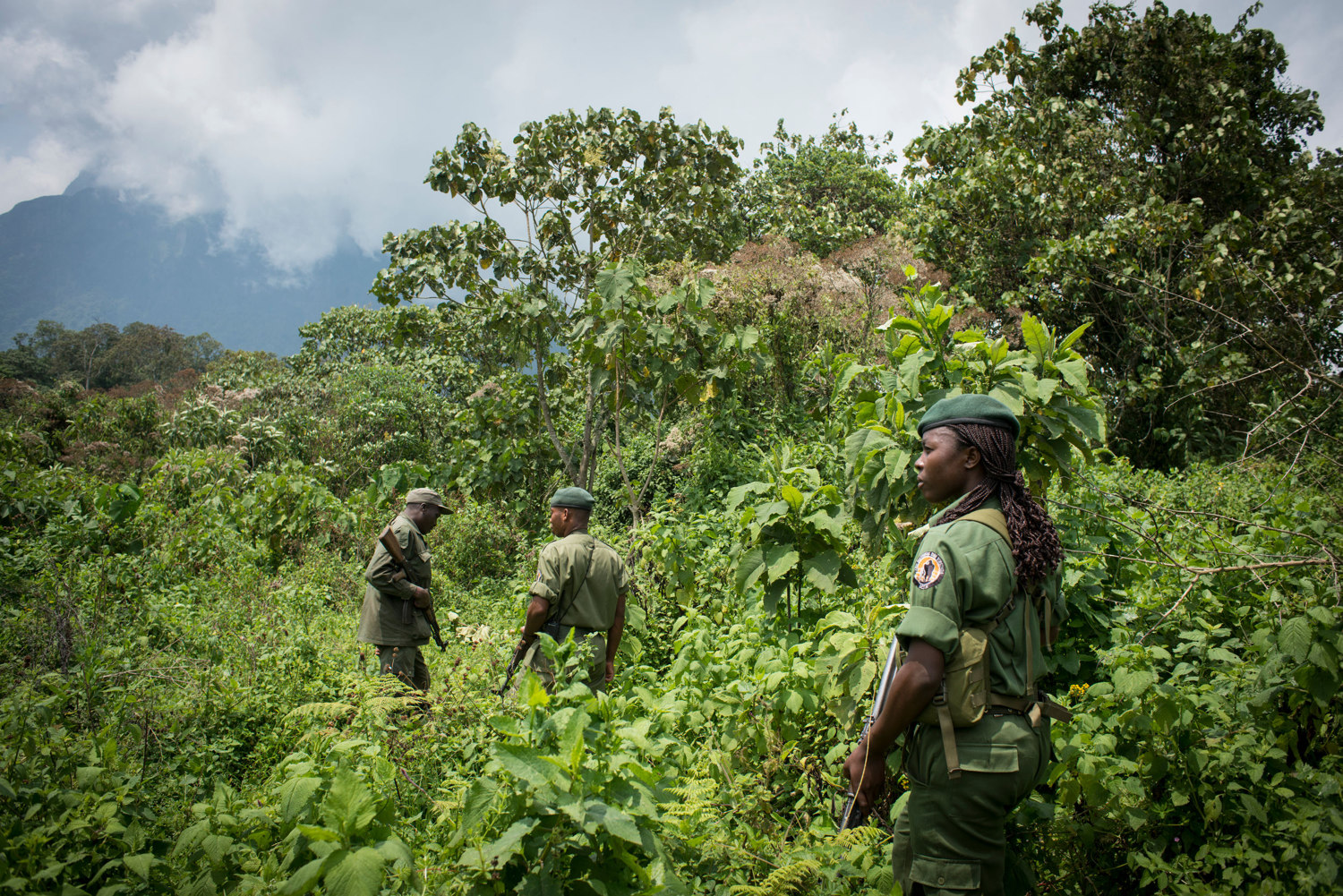 Aline, along with other rangers and park staff visit the gorilla's in the parks Mikeno sector. Mt. Mikeno can be seen in the distance.