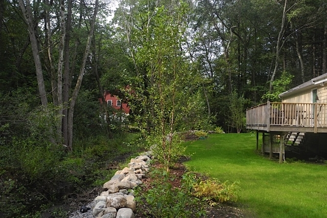 An informal fieldstone wall and regrading helps with the drainage and native River Birch trees and Twig Dogwoods do well in the moist soil.