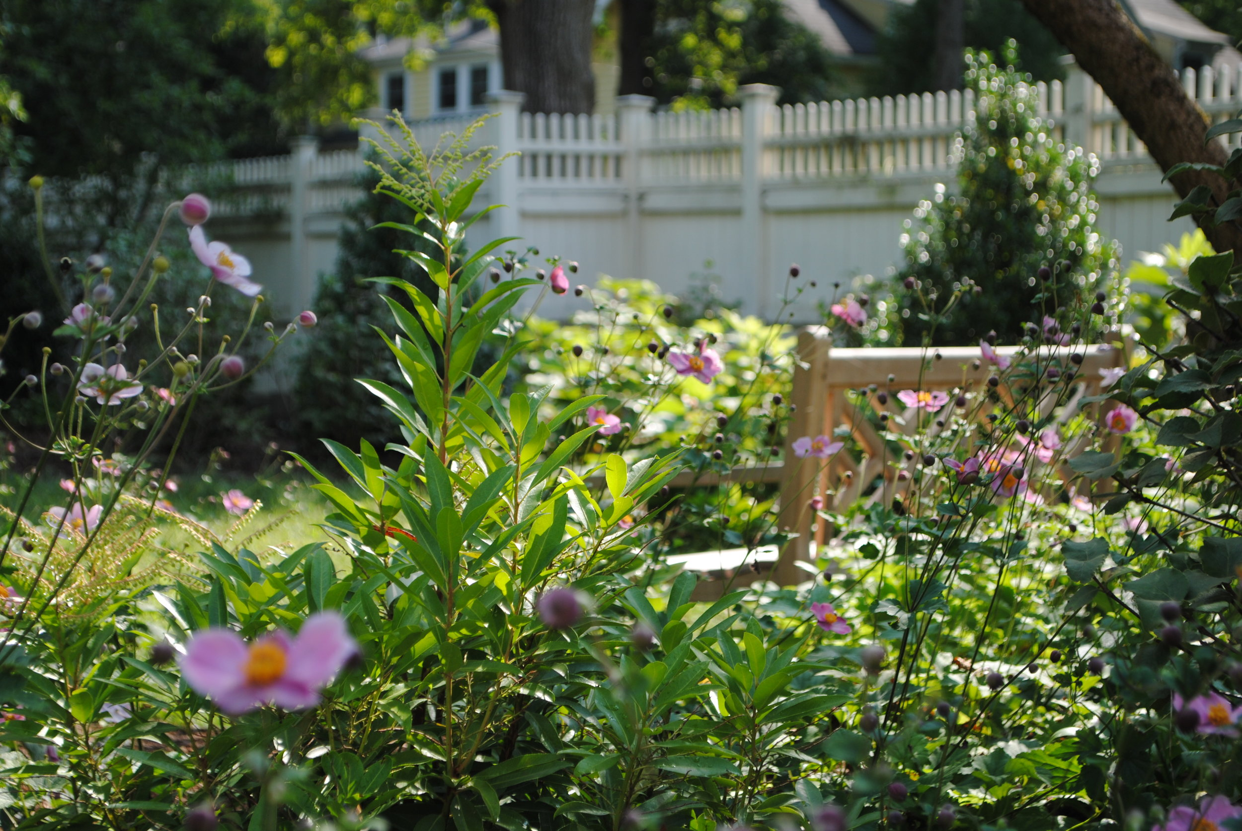 A backyard formally filled with lawn and many invasive plants is cleared out and rejuvenated with new shrubs, trees and flowers.