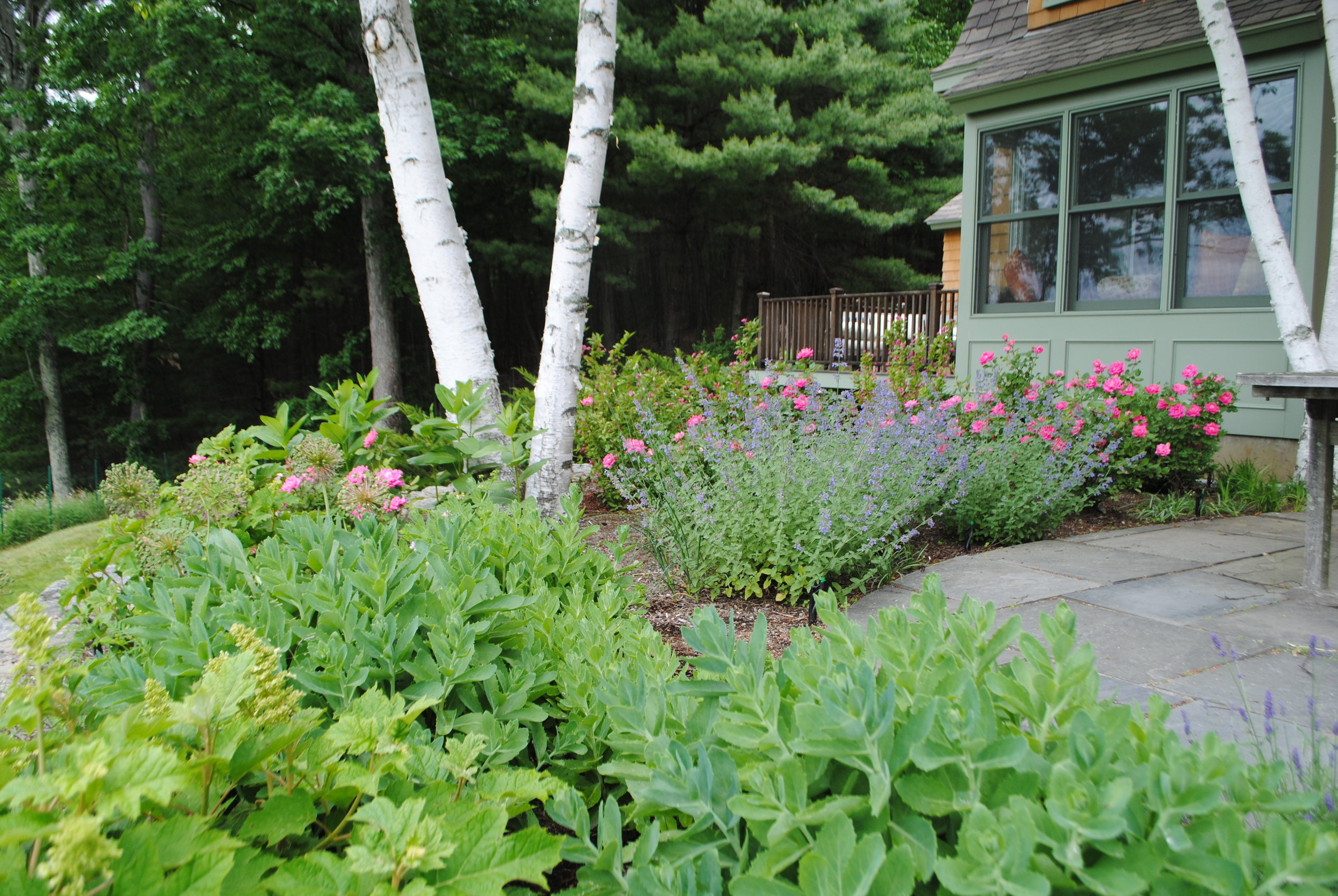 The bluestone is reset in the patio and weeds replaced with hardy shrubs such as Oakleaf Hydrangea and perennials such as Autumn Sedum and Catmint.