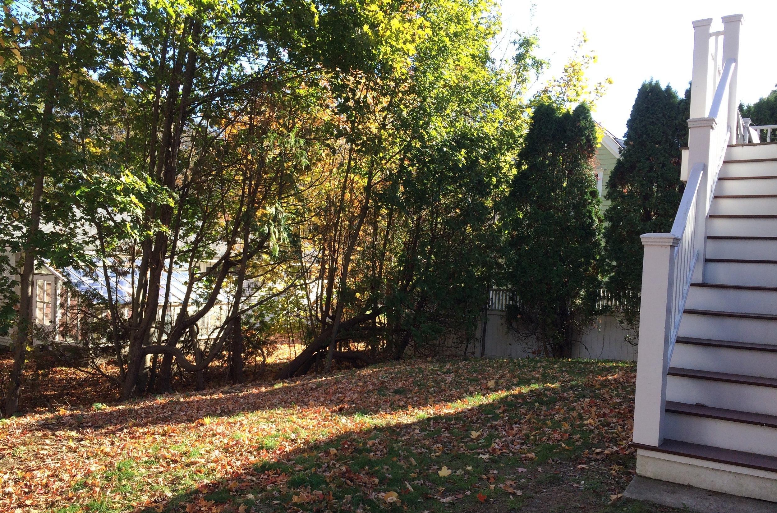 Backyard, Concord, MA