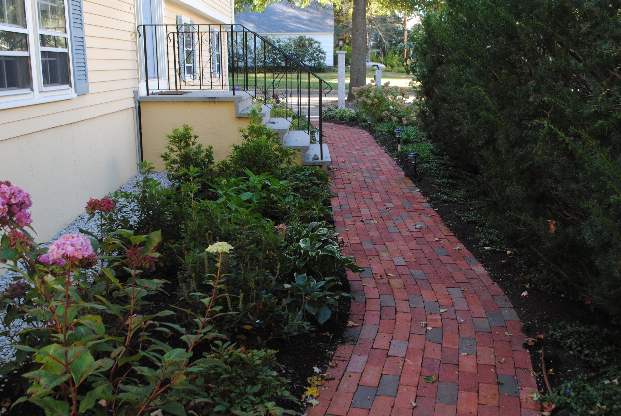 This narrow strip at the side of the house is made inviting with a new brick path and interesting shrubs.