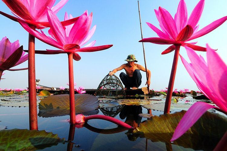 Red Lotus Sea | Udon Thani, Thailand