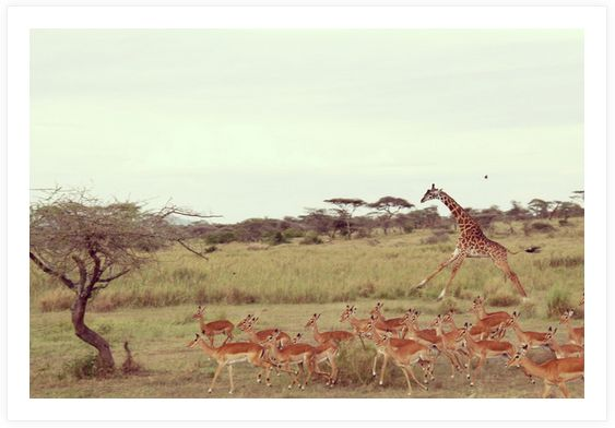serengeti5.jpg