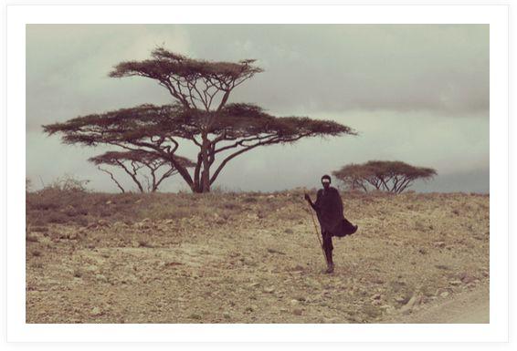 serengeti6.jpg