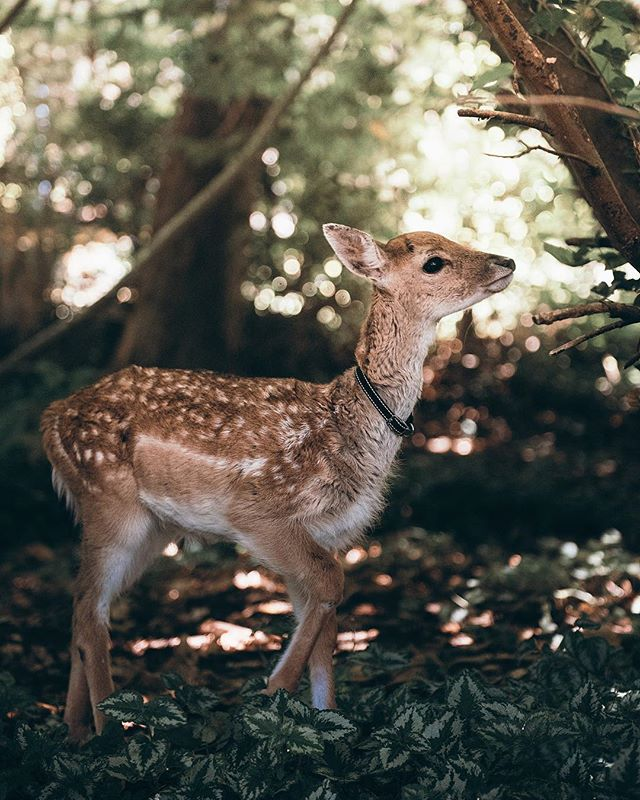I love the perspective such a beautiful and gentle being can evoke ✨🌿 Sweet little Fern the rescue fawn