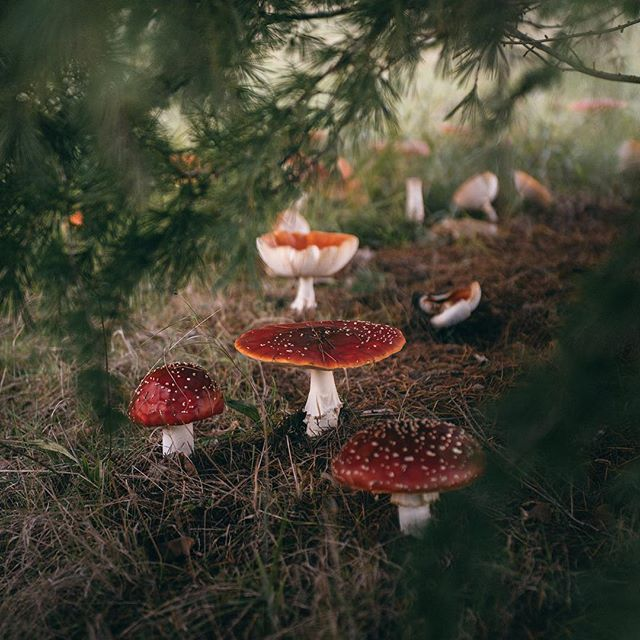 Autumnal magic 🍄🌿