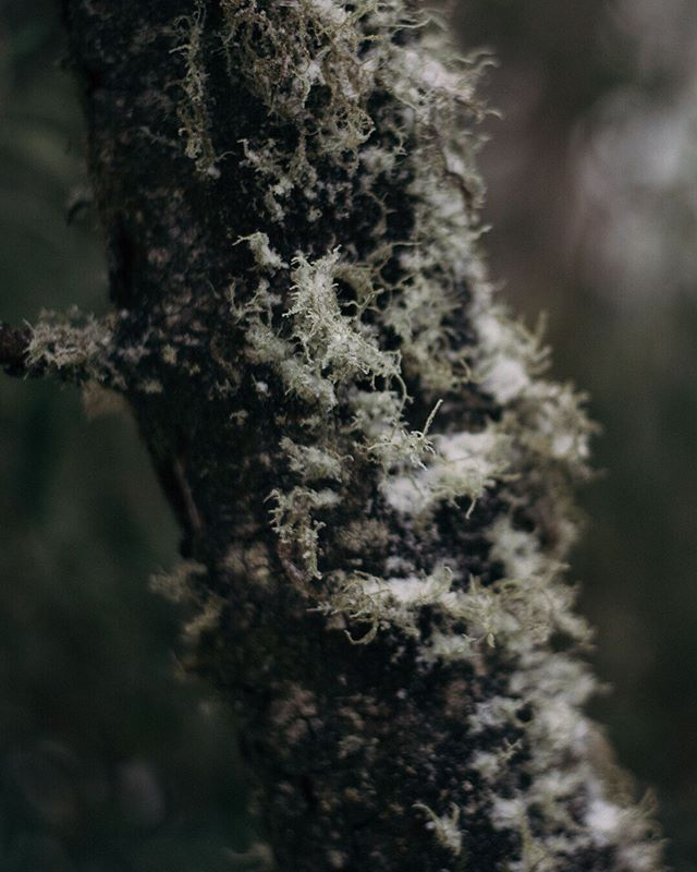 First day of winter so here's some snowy lichen from our neighbouring mountain the other day ❄️🌿