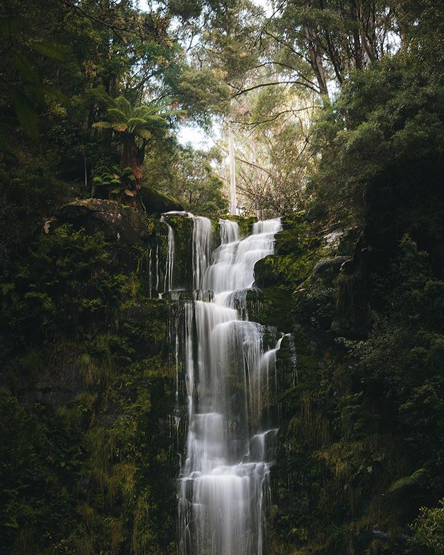 Photography Workshops! I'm running two photography workshops in the Dandenong Ranges this month for Landscapes and Product Photography. You just need some sort of camera, whether it's a phone or a DSLR, and I'll teach you the rest 🌿 Link in my bio for more info and booking!