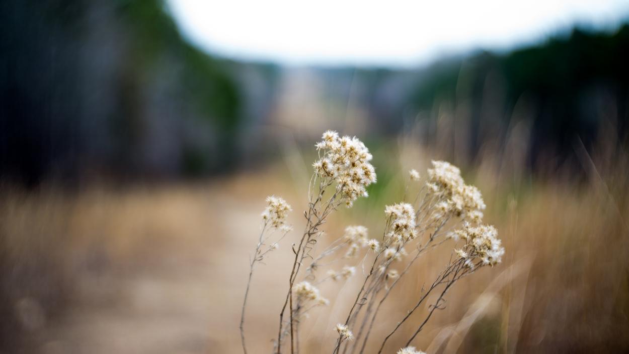 Outdoor Spotlight: Louise Kreher Ecology Preserve
