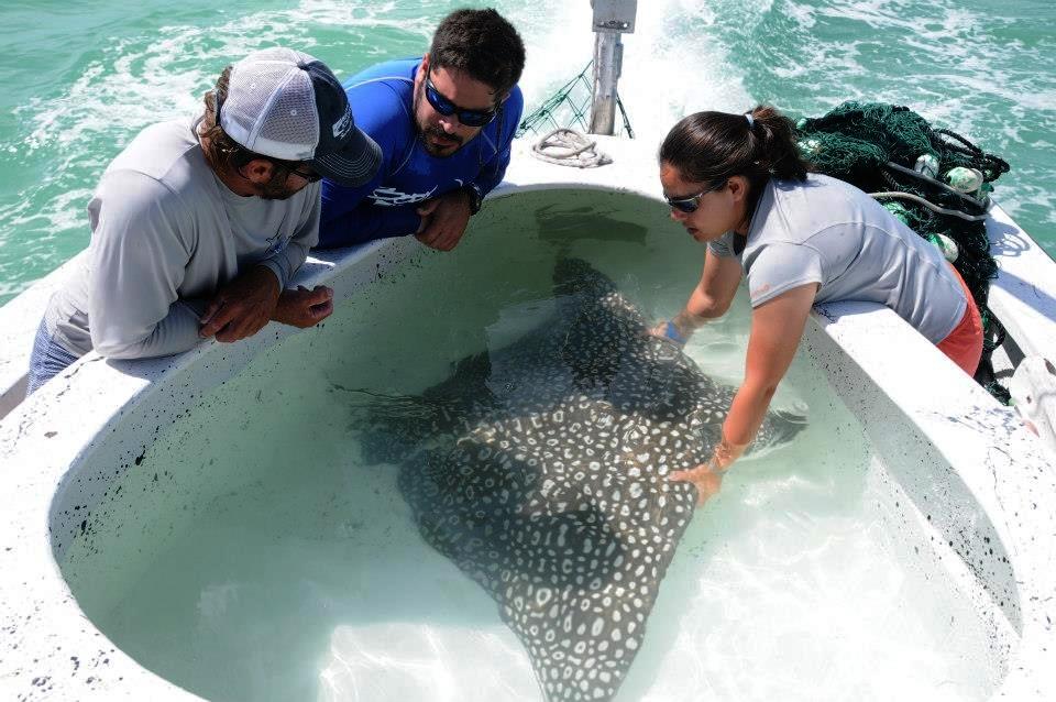 Photo credit: Mote Marine Laboratory