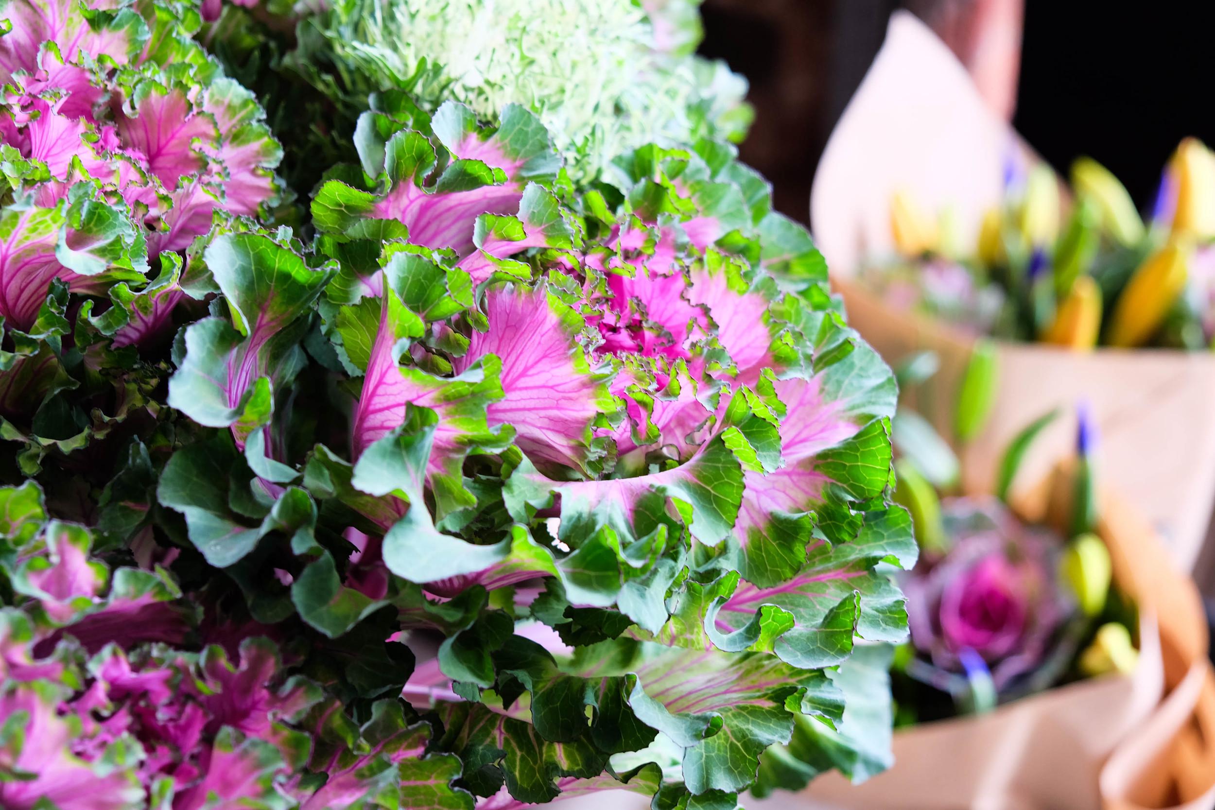 Beautiful kale flowers