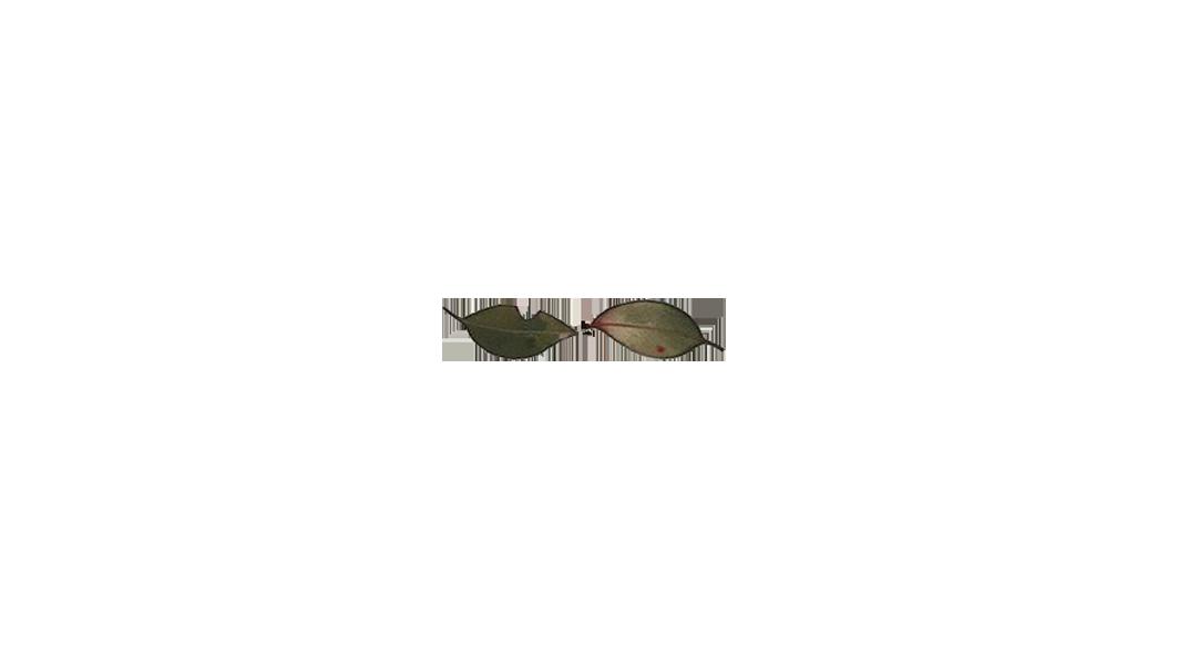 Leaf7.png
