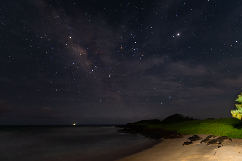 Sea Turtles sleeping under the stars on the beach of Nomilu, Kaua'i.