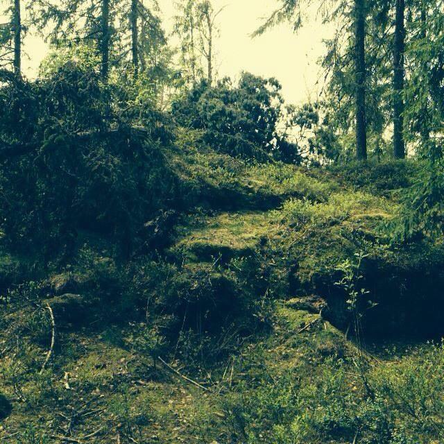 skov.jpg