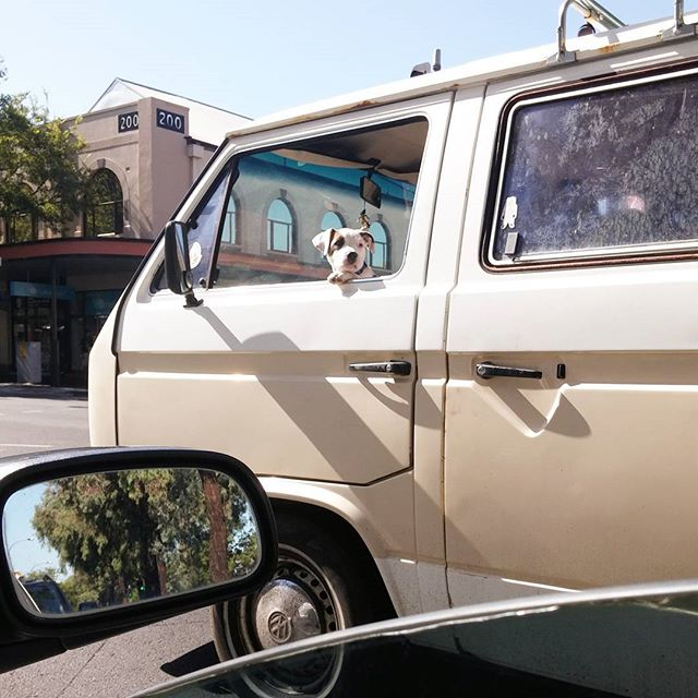 Puppy in a VW Caravelle. My two favourite things ever. 🐶❤✌ #Sunday