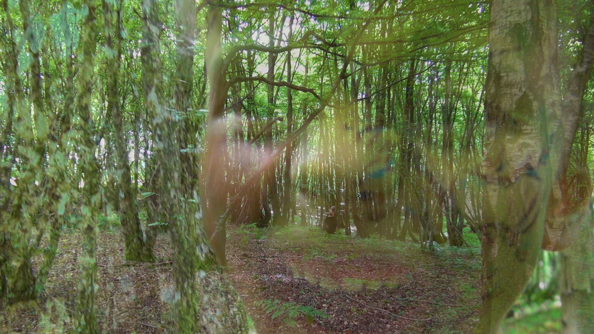 Forest Walk.00_02_32_05.Still007.jpg