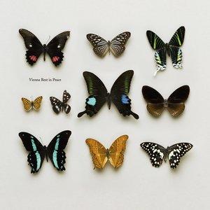 Vienna R.I.P. - album production & homepage designwww.vienna-rip.com