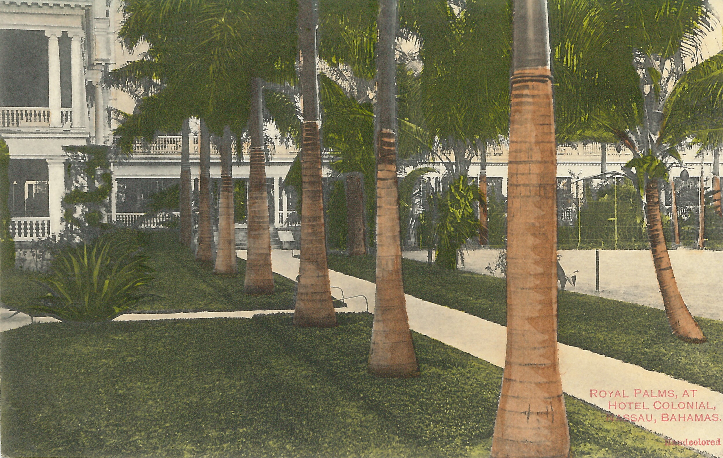 'Royal Palms at Hotel Colonial' (estimated c.1890-1930). Handcoloured colonial-era postcard by unknown artist.