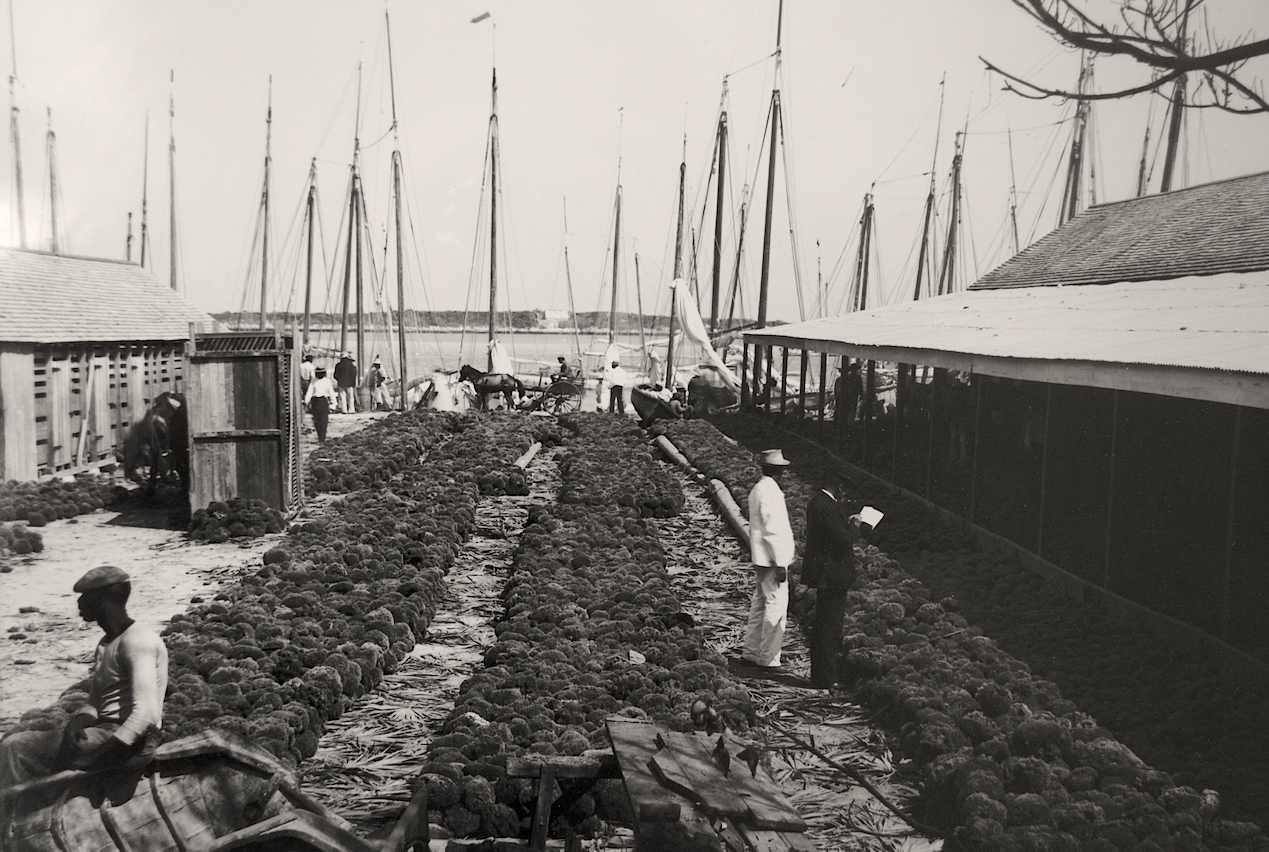 """""""Sponge Yard"""" (ca. 1870-1920), Jacob F Coonley, albumen print, 7 x 8. Part of the National Collection, previously owned by R. Brent Malone."""