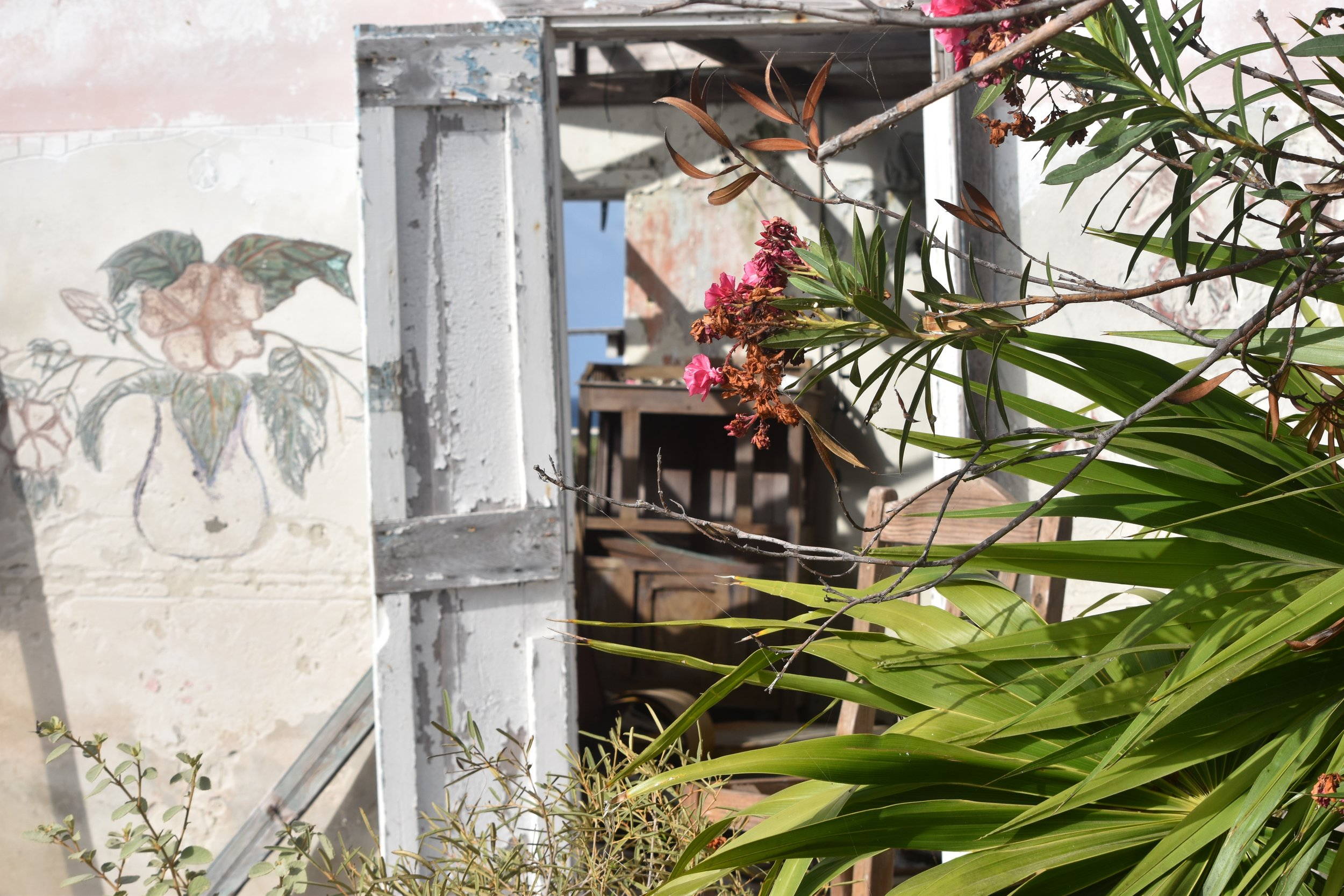 Art in daily life. Blooms of oleander and sketchings on a wall on Ragged Island. Images courtesy of Dr Ian Bethell-Bennett.