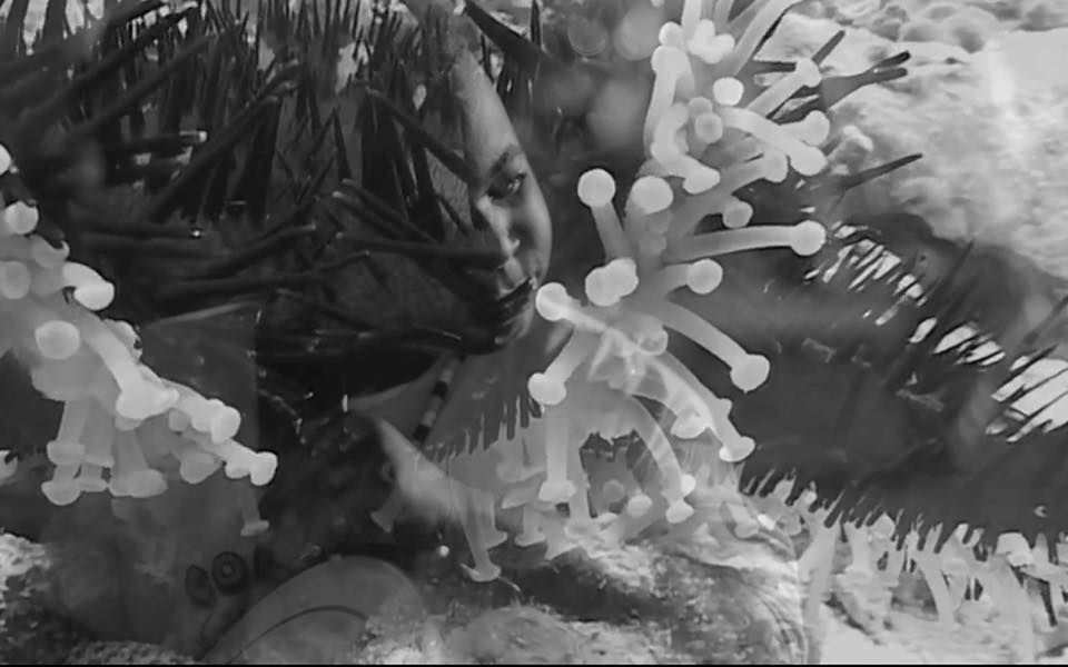 When the Lionfish Came, directed by Tamika Galanis