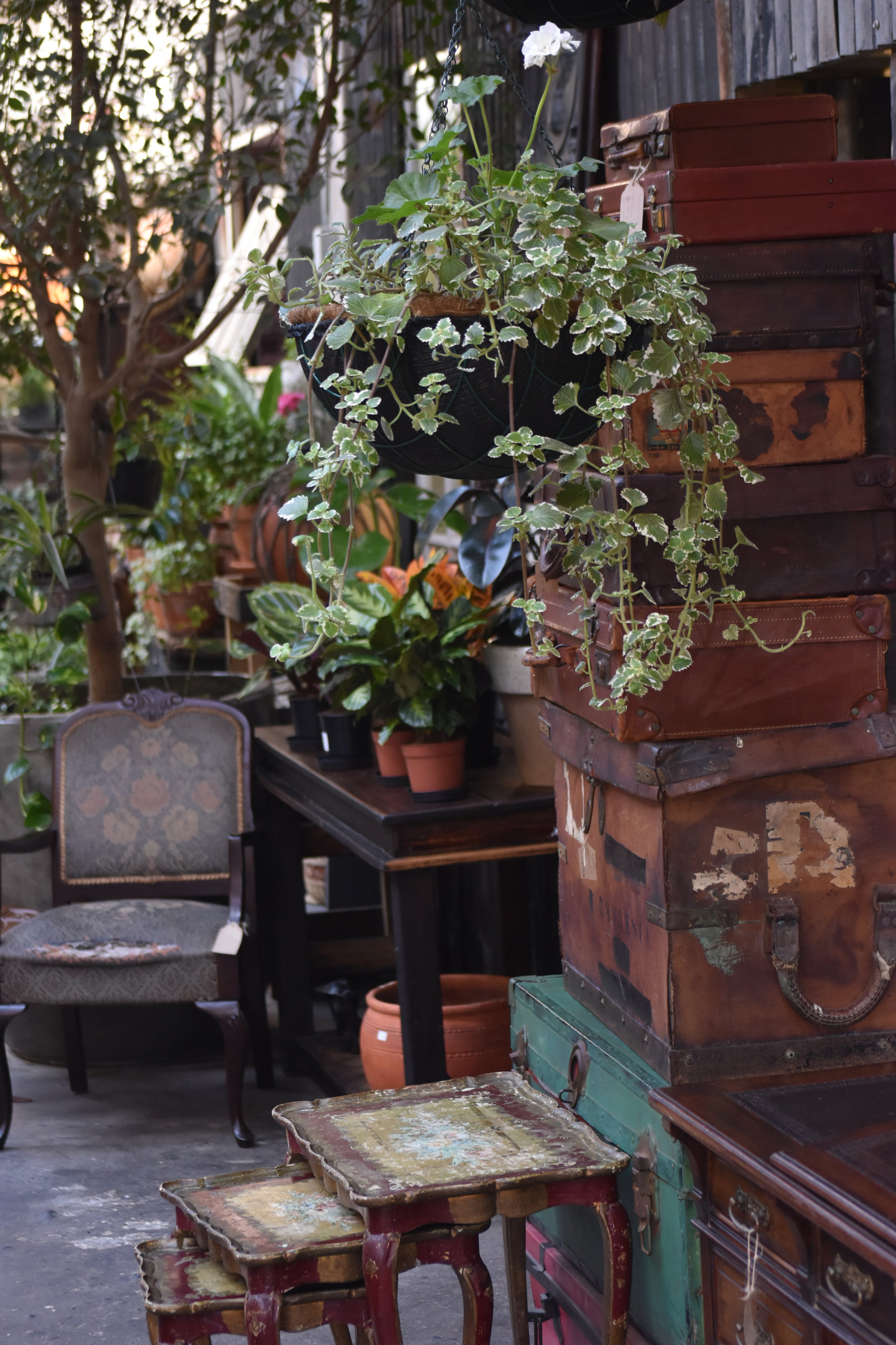 Trunks and plants at Yours Truly Cafe at 117 Kloof