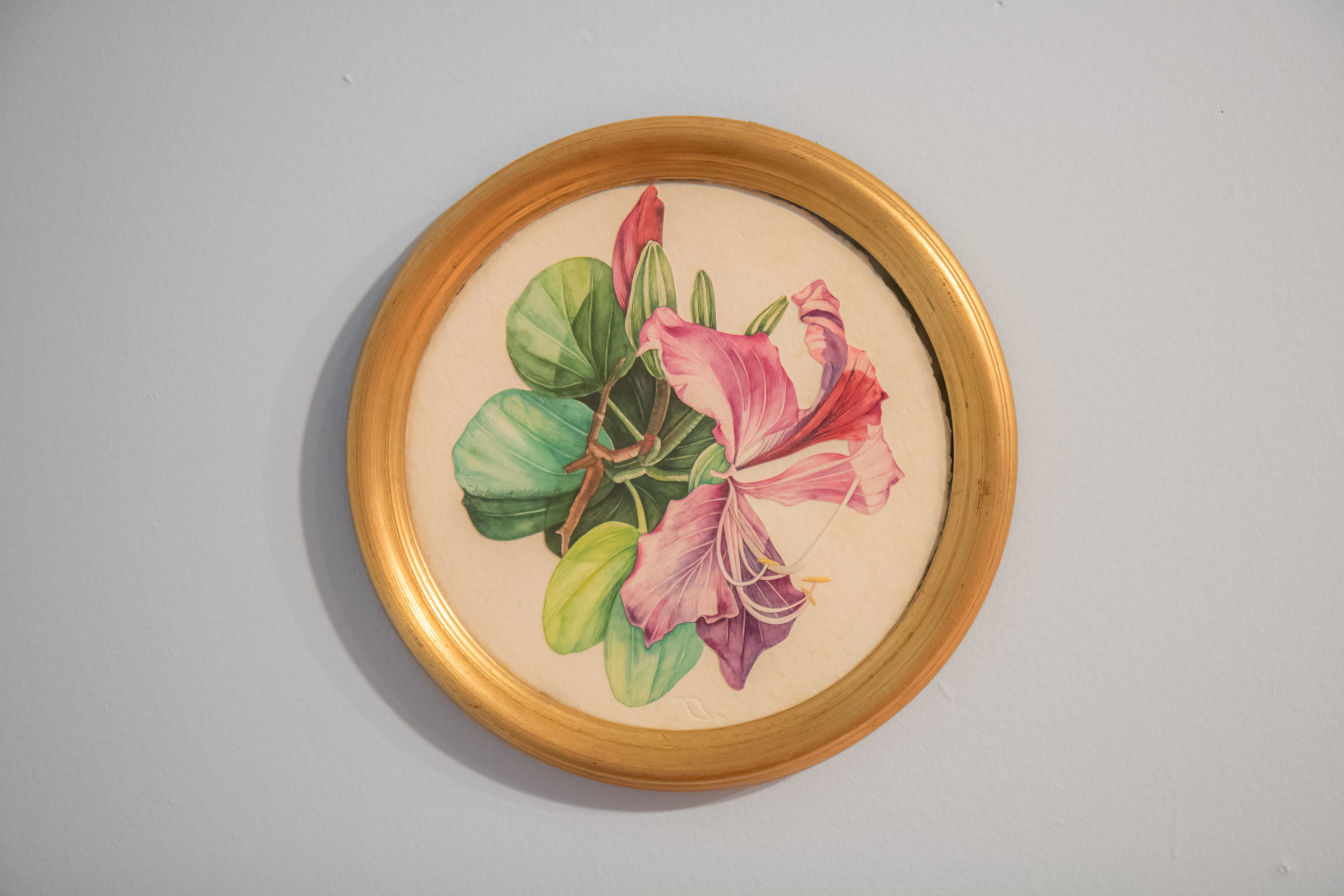 """Poor Man's Orchid"" (1989) Sue Bennett Williams, watercolour on paper, 11 inches diameter. The Dawn Davies Collection."