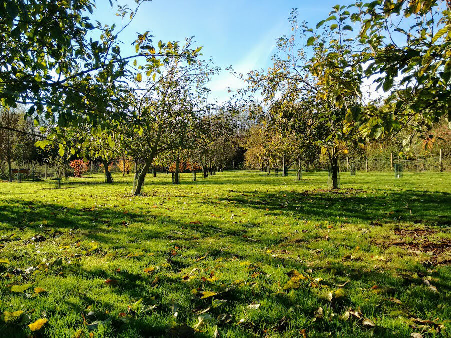 Orchard November 2016 Wellness.jpg