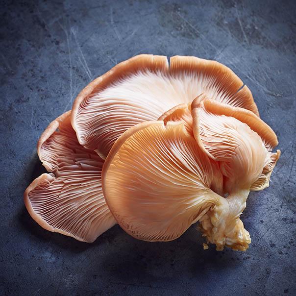 Mushroom_PinkOyster.jpg