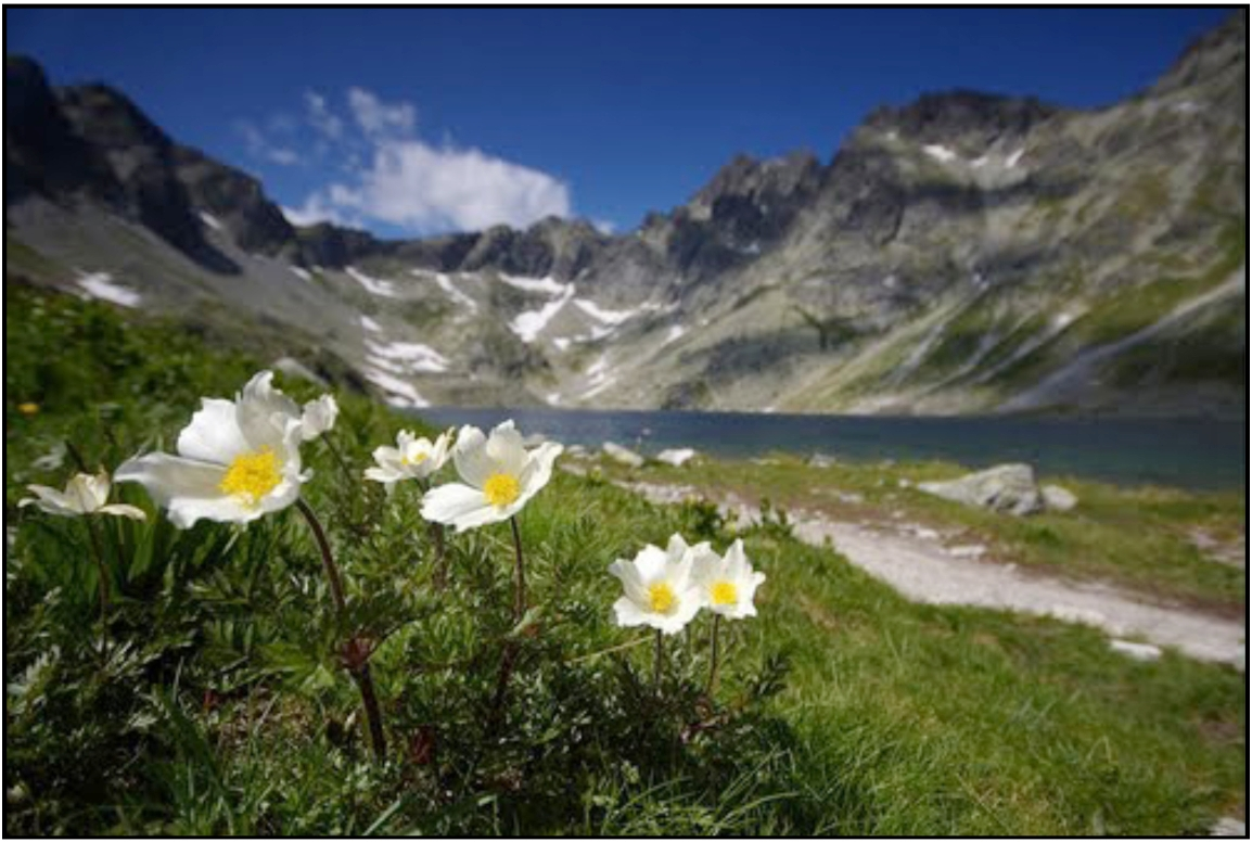 High Tatras meadow, Czechoslovakia