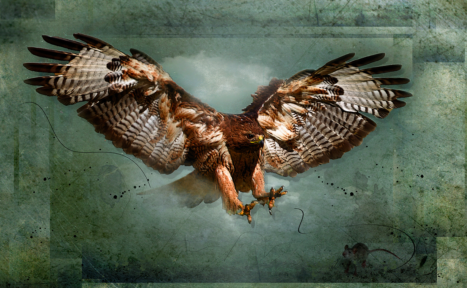 Redtail Attack