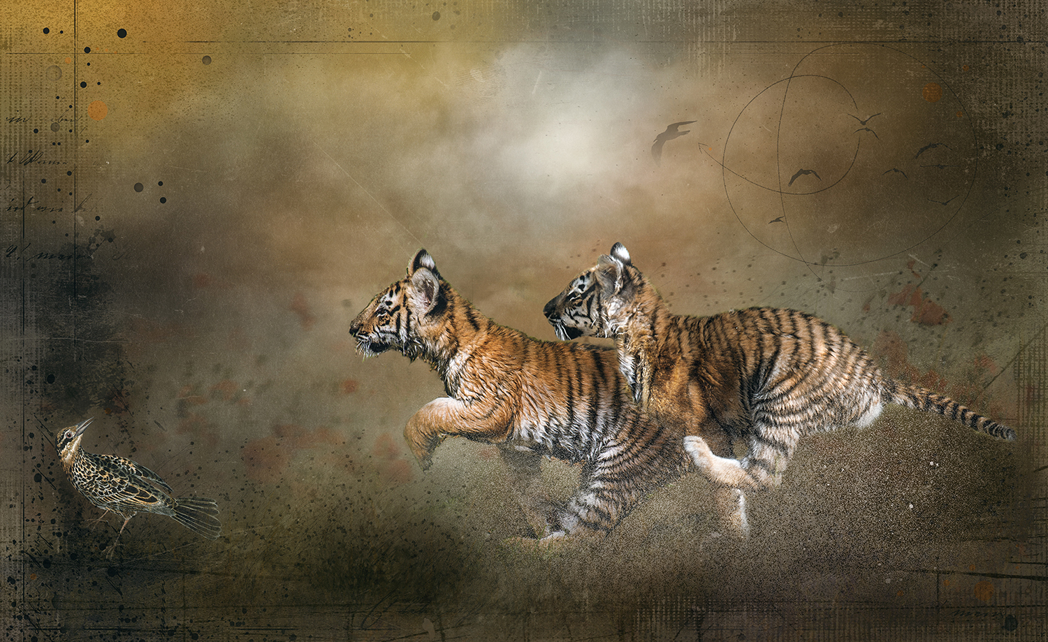 Tiger Cub Chase