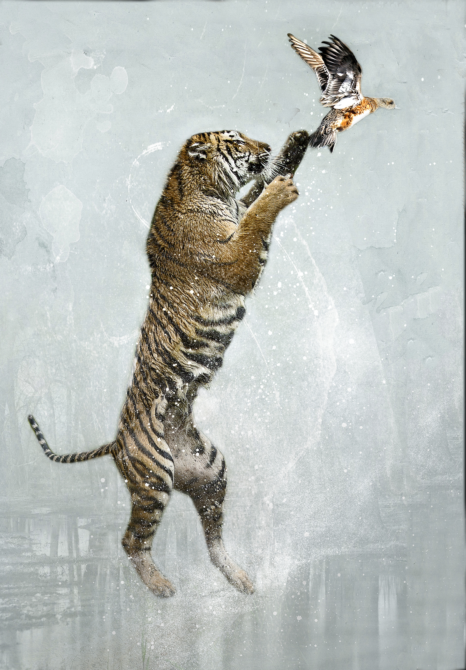 Tiger Leap 1