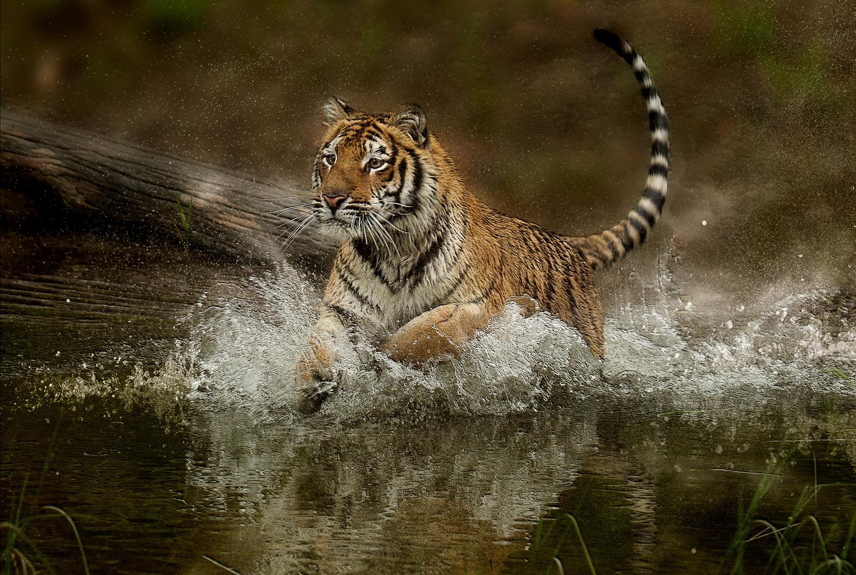 Refreshing Splash