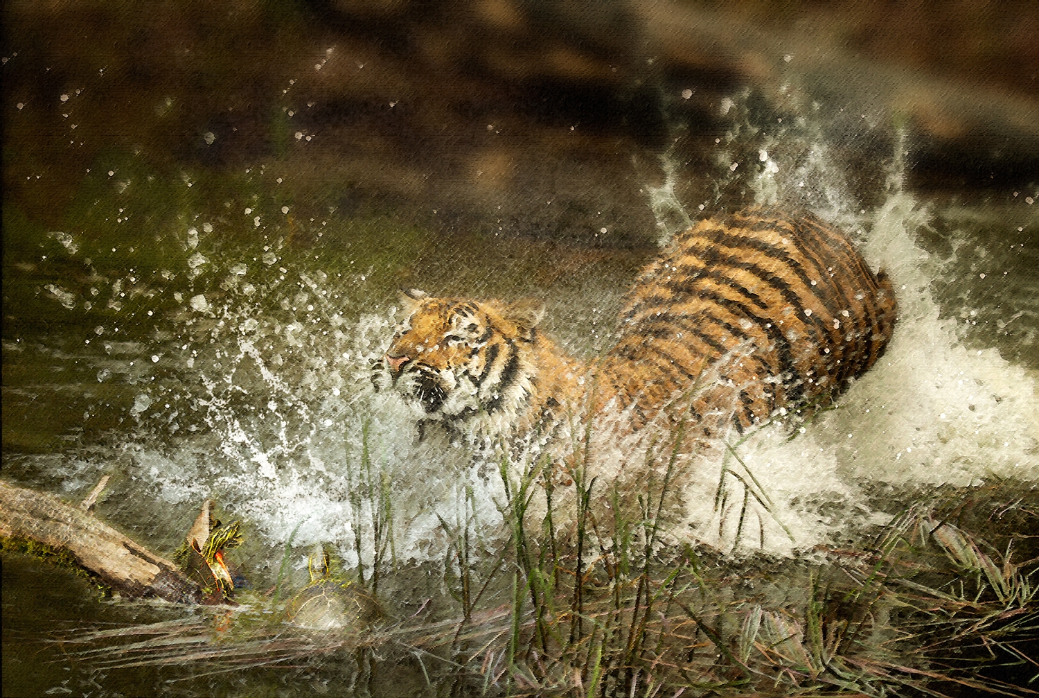 Tiger Splash 2