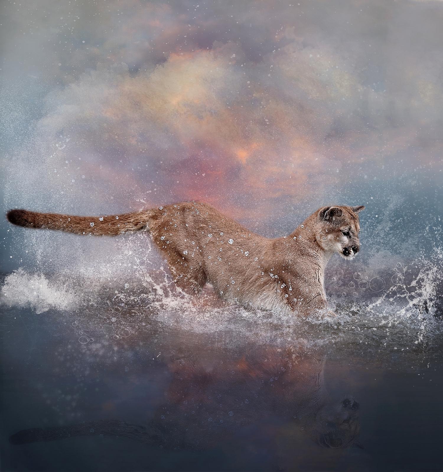 Playful Cougar