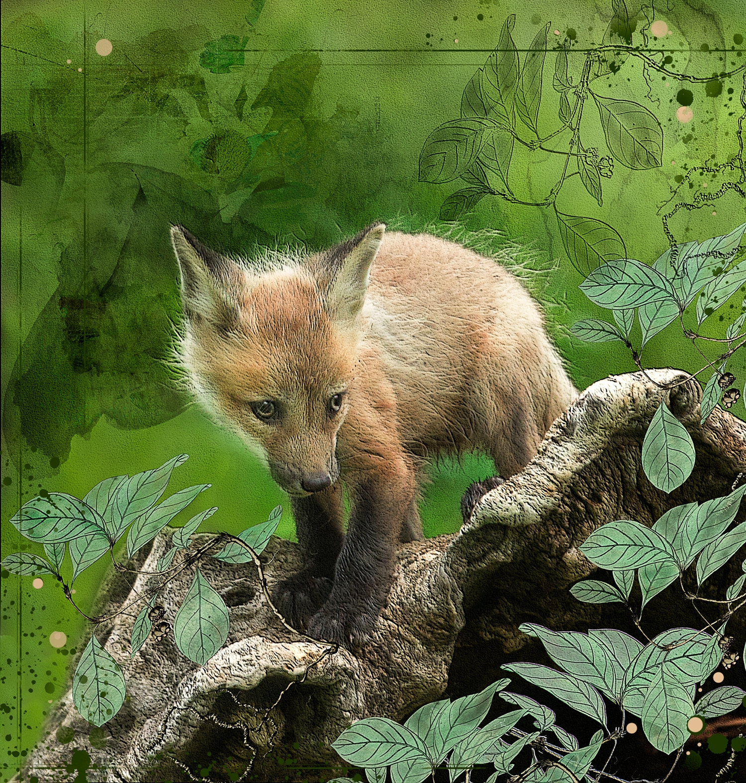 Shy Red Fox Kit