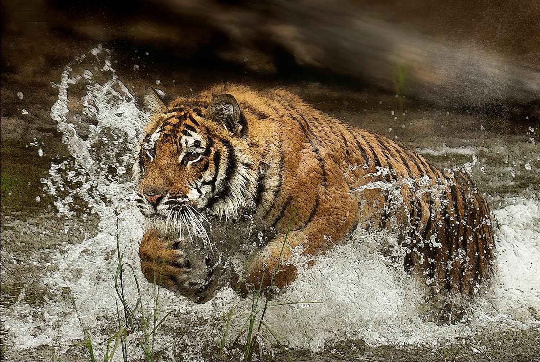 A Great Splash