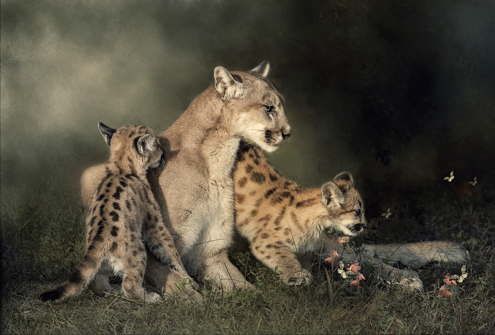 Cougar and Two Kittens