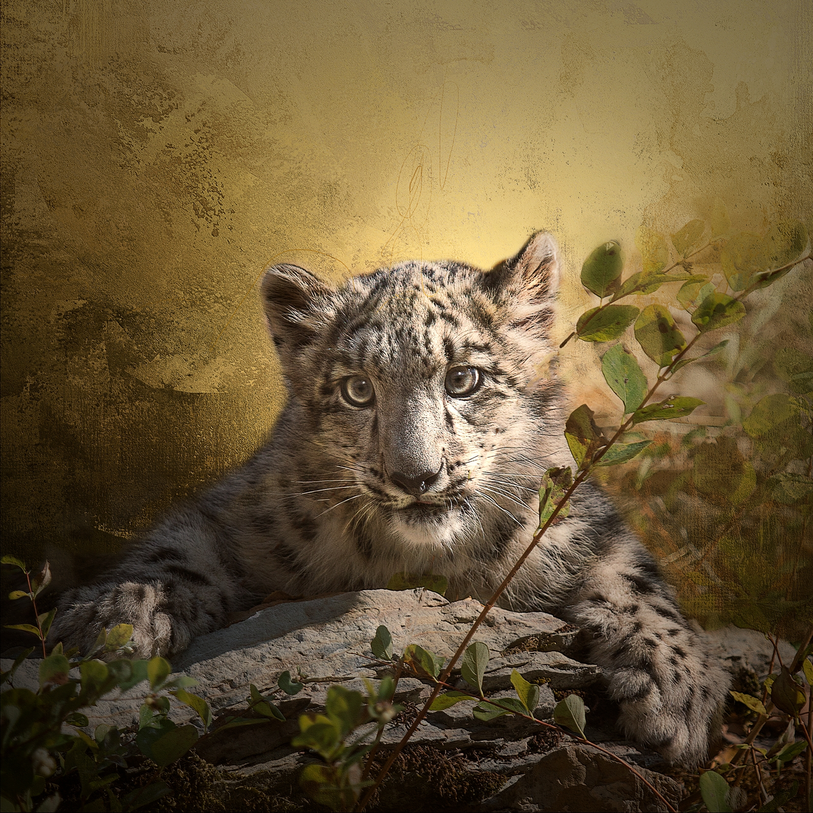 Hiding Leopard Kitten