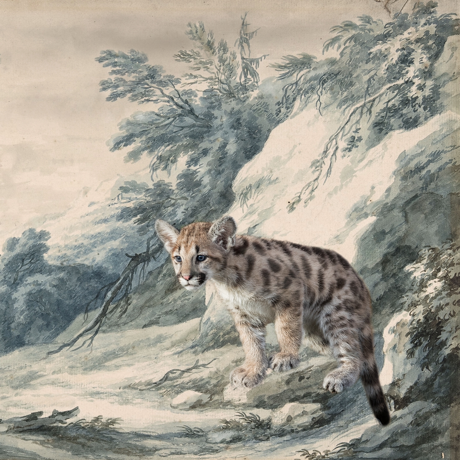 Cougar Kitten on Snowy Ledge