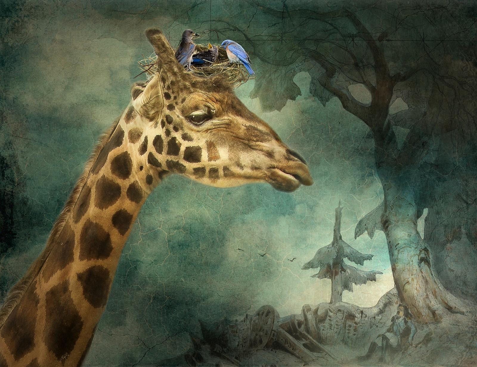 Kind Giraffe, Saving the Bluebirds